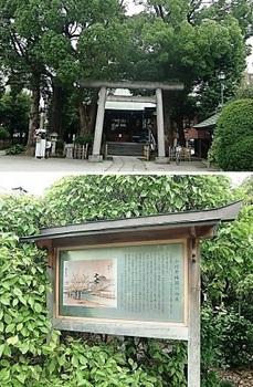 小村井梅園.jpg